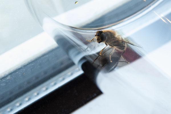 Wespe im Glas gefangen