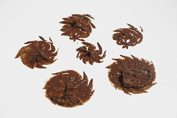 Schoko-Cupcakes mit aufgeschlagener Schoko-Ganache und Schokosirup